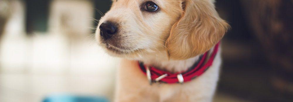 pet health insurance Owasso OK